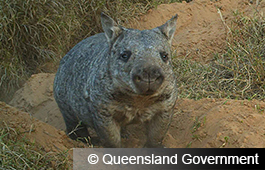 Queensland Government (6)