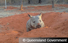 Queensland Government (4)